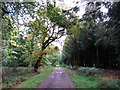 SP5101 : Woodland ride in Bagley Wood by Steve Daniels