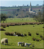 SP9599 : Sheep and pasture next to the River Welland by Mat Fascione