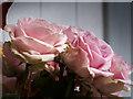 SP1984 : Floral Display Inside Hall 5, NEC, Birmingham by Christine Matthews
