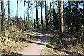 ST1897 : Roger Lewis Woodland Garden, Oakdale by M J Roscoe