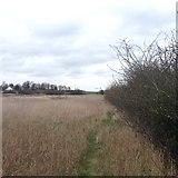 TL1459 : Path towards Staploe by Dave Thompson