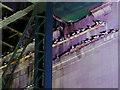 NZ2563 : Kittiwakes Under Tyne Bridge by David Dixon