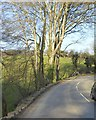 SW6326 : Bend in B3304 south-west of Helston by David Smith