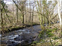 SX7879 : River Bovey in Hisley Wood by David Smith