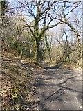 SX7780 : Houndtor Wood by David Smith