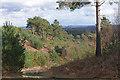 SU9052 : Richochet Hill, Ash Ranges by Alan Hunt