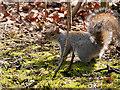 SD8204 : Squirrel in the Dell at Heaton Park by David Dixon
