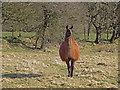 SN1444 : Llama at Tre-newydd by Dylan Moore