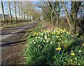 TA0243 : Grange Road, Leconfield by Paul Harrop