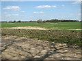 TF8508 : Crop fields by Town Farm by Evelyn Simak