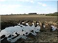 TF8508 : Crop fields by Petygards by Evelyn Simak