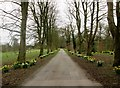 TA1746 : The  driveway  to  Wassand  Hall  in  Springtime by Martin Dawes