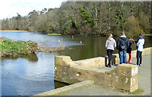 NS2209 : Easter Sunday at Culzean by Mary and Angus Hogg