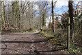 SO5897 : Shropshire Way, Wenlock Edge by Ian S