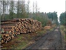 SK5954 : Log pile in Gorse Covert by Graham Hogg