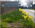 TL0394 : Daffodils next to the village sign by Mat Fascione