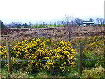 H5672 : Bogland, Mullaghslin Glebe by Kenneth  Allen