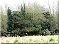 TG1707 : Hiding in dense vegetation by Evelyn Simak