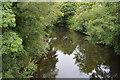 SK2960 : River Derwent by N Chadwick