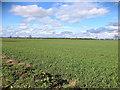 SD4413 : Burscough Moss by David Dixon
