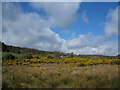 S7141 : Clouds and Furze by kevin higgins