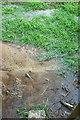 ST7256 : Wet footpath near Double Hill by Derek Harper