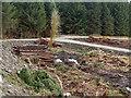 NN1423 : Timber stacks beside forest roads by Trevor Littlewood