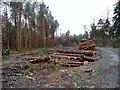 NZ1252 : Log piles in Billingside Plantation by Robert Graham