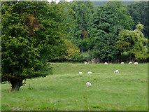SJ2442 : Pasture and woodland east of Llangollen by Roger  Kidd