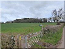 SS8303 : Footpath sign and Hill Copse by David Smith
