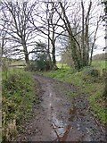 SS8303 : Muddy track across the Creedy valley by David Smith
