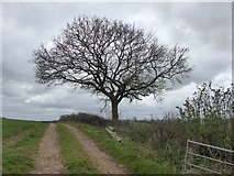 SS8403 : Track from Bremridge Farm to Upton Hellions (2) by David Smith