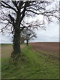 SS8503 : Field boundary (bank) south of The Broxfords by David Smith