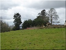 SS8302 : Fallen tree near Sandford Parish Hall by David Smith