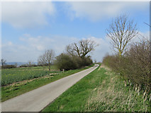 TA0114 : Middlegate Lane near Worlaby by Paul Harrop