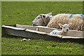 SS2325 : Torridge : Grassy Field & Sheep by Lewis Clarke