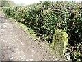 SE1238 : Marker stone near South Lodge by Christine Johnstone