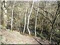 SE1240 : Loadpit Beck, Shipley Glen by Christine Johnstone