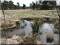 TQ4131 : Small pond on Ashdown Forest by Marathon