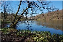 NS2209 : Swan Pond At Culzean by Mary and Angus Hogg