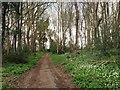 TQ7963 : Chapel Lane, Hempstead by Chris Whippet