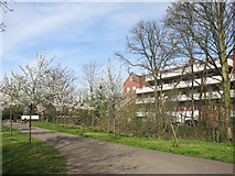 TQ2688 : Capital Ring in Lyttleton Park by Des Blenkinsopp