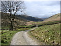 NY5202 : The Bannisdale track by David Purchase