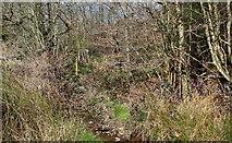 ST1897 : Nant Philkins below Cyncoed Farm by M J Roscoe