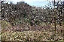 ST1897 : Cwm Philkins below Llys-pentwyn-uchaf by M J Roscoe