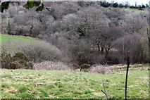 ST1897 : Pasture, Cwm Philkins, near Llys-pentwyn-uchaf by M J Roscoe