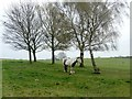 SE3519 : Horse tethered to a tree on Heath Common by Graham Hogg
