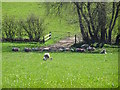 SK5125 : Sheep in the shade by the line of a footpath by Ian Calderwood
