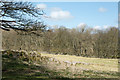 NY4923 : Trees at Skirsgill Hill by Trevor Littlewood