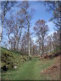 SK2479 : Birch Woodland by Stephen Burton